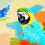 O passarinho e o papagaio