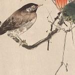 Ilustradores japoneses que fizeram história