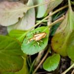 Transformando lixo em insetos