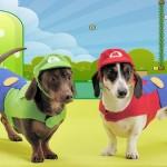 Roupinhas geek para cachorros