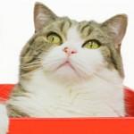UNIQLO adota o gato Maru em campanha