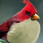 Angry Birds realistas?!