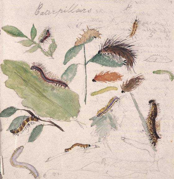 Estudo sobre lagartas, com 8 anos de idade.