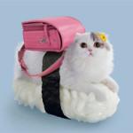 Você conhece os Sushi Cats?