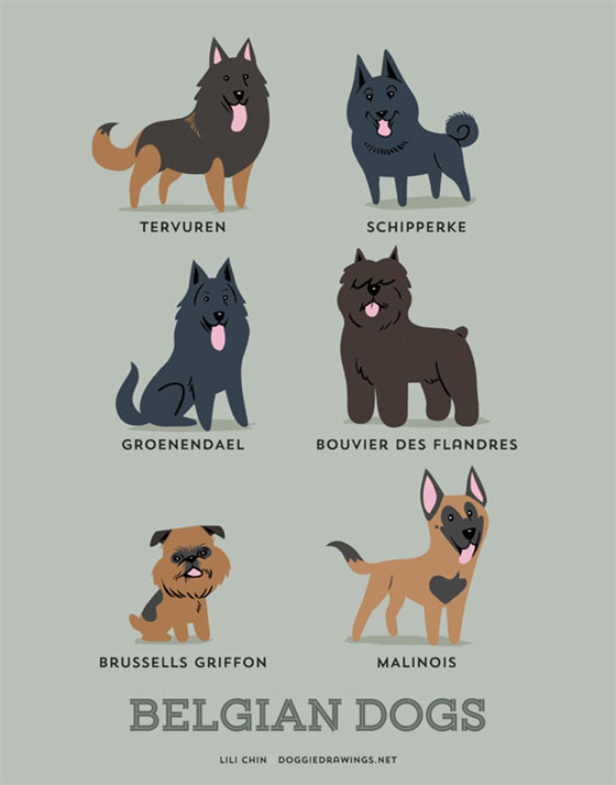 dogs10