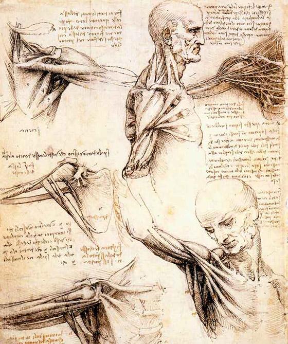 Estudos de anatomia por Da Vinci