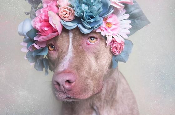 dogflower-destaque