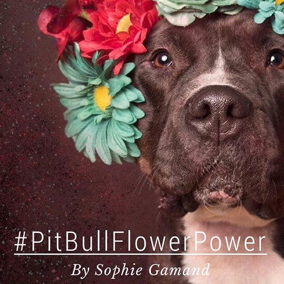 dogflower-title