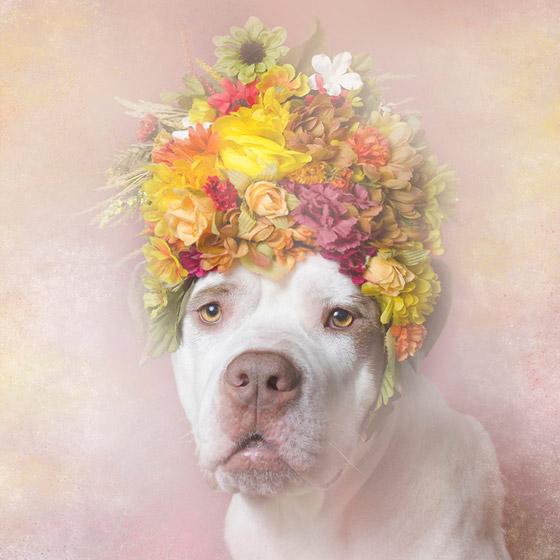 dogflower1
