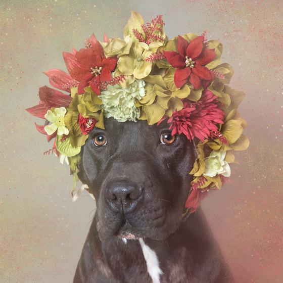 dogflower2