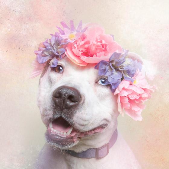 dogflower3