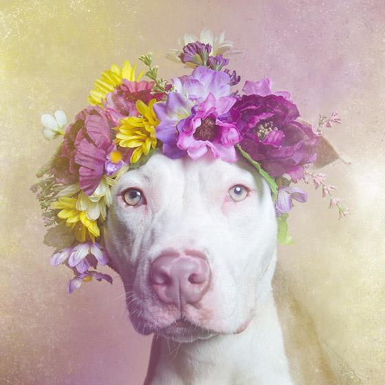 dogflower5