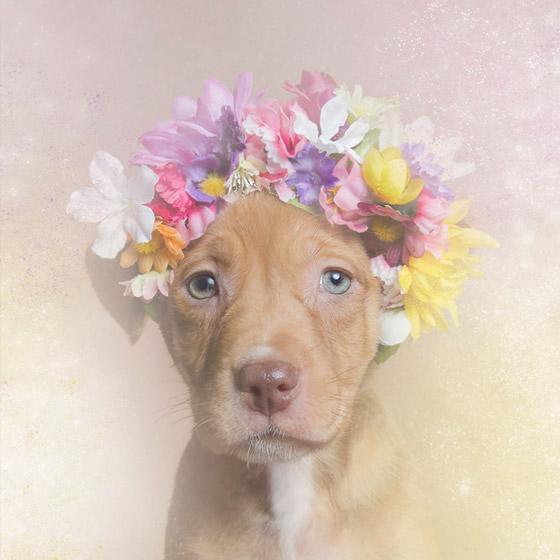 dogflower7