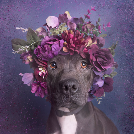 dogflower8