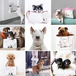 Cachorro de grife: Jimmy Choo lança coleção inspirada em cão brasileiro