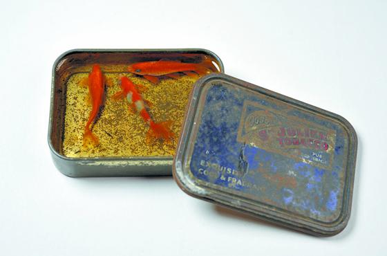 goldfish6
