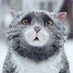 Não é só um vídeo fofo de gato: esta campanha de Natal tem muita coisa pra contar