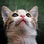 Como fotografar gatos: 12 dicas de um profissional