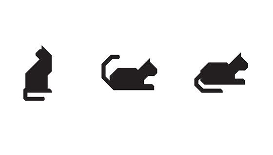 nyc-cat